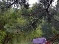 Природа после дождя