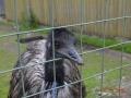 Страус в зоопарке