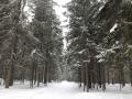 Зимний лес на Городомле