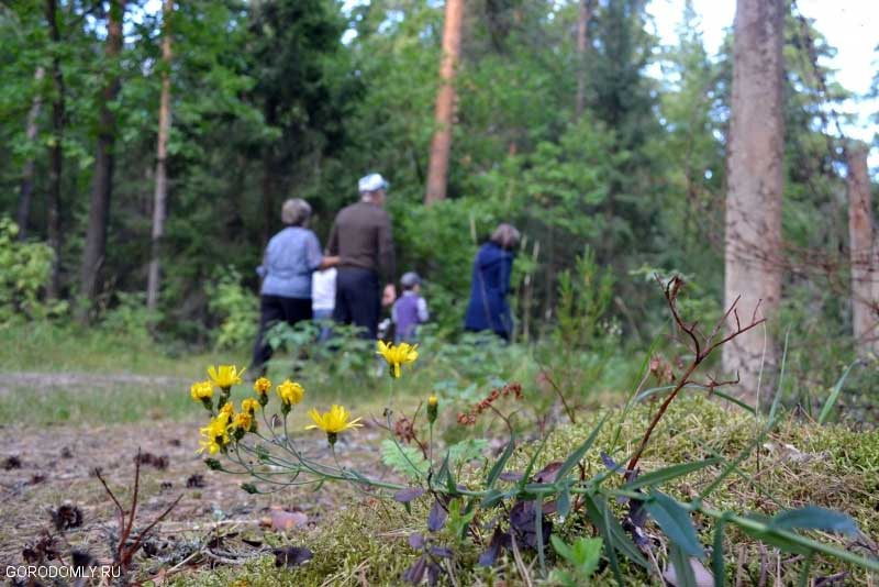 Прогулки по лесу