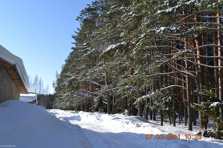 Зимний лес на Городомле.