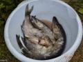 Плоды селигерской рыбалки