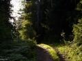 Природа на Городомле.