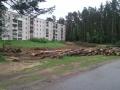 Городомля. Лес рубят- щепки летят!!!