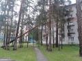 Дерево упало на дом