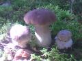 Первые грибы этого года.