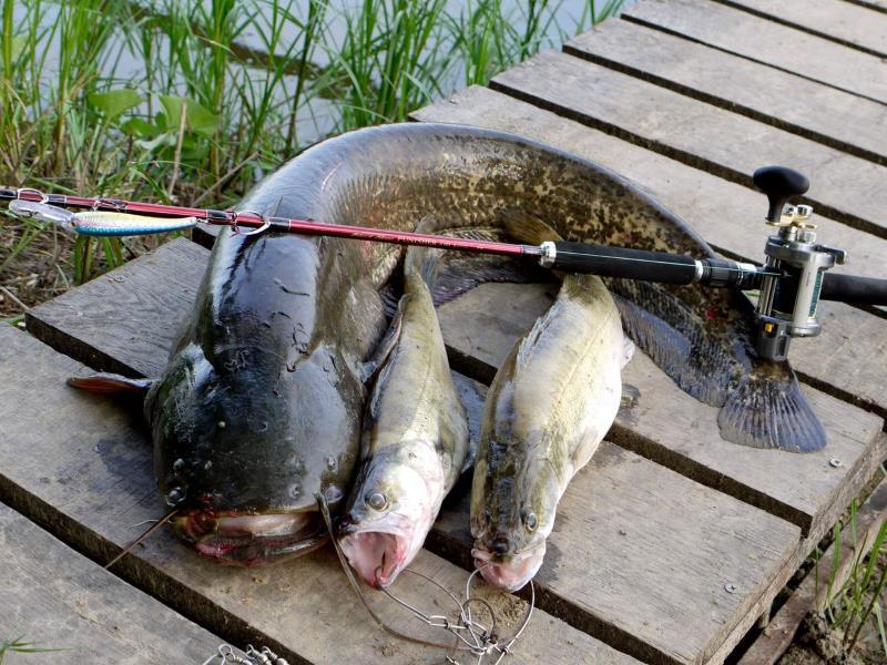 ростов ленинаван рыбалка
