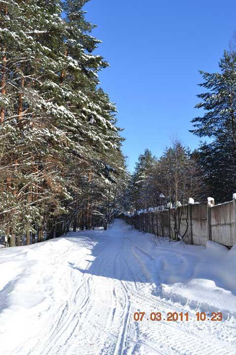 Сосновый лес зимой на Городомле.