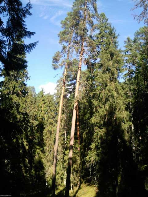 Лес Городомли в сентябре